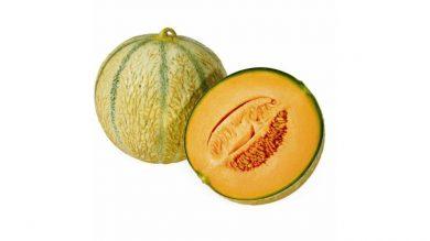Melone retato tipo harper
